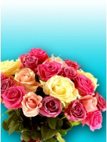 2 Dozen Mix Roses Bouquet